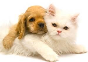 pet microchipping Ahwatukee Animal Care Hospital
