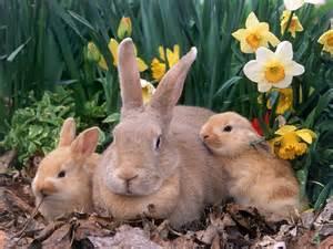 Rabbits Ahwatukee Animal Care Hospital