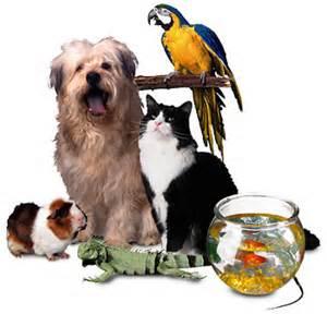 Ahwatukee Animal Care Hospital