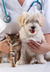 Routine wellness examinations Ahwatukee Animal Care Hospital