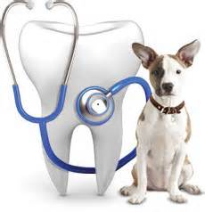 Dental Care Ahwatukee Animal Care Hospital