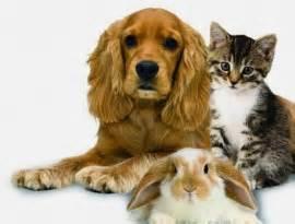Ahwatukee Animal Care Hospital - pain management