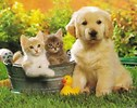 Ahwatukee Animal Care Hospital and Pet resort - spays and neuters
