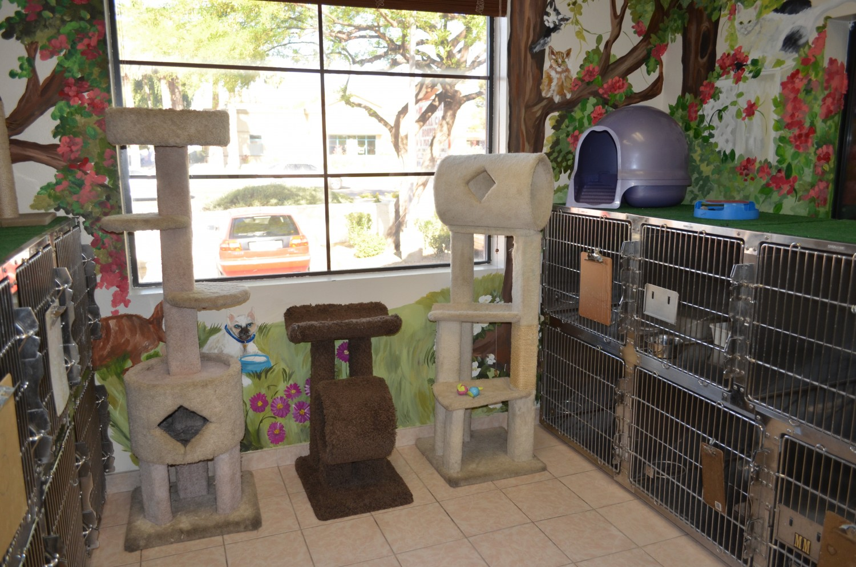 Cat boarding at Ahwatukee Animal Care Hospital