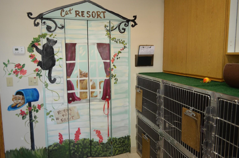 Feline Boarding at Ahwatukee Animal Care Hospital
