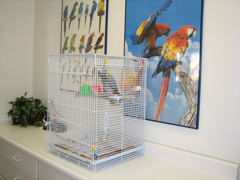 exotic and bird boarding at Ahwatukee Animal Care Hospital