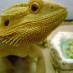 Ahwatukee Animal Care hospital and Pet Resort testimonials