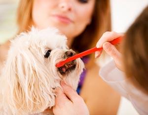 Pet dental care Ahwatukee Animal Care Hospital veterinary practice