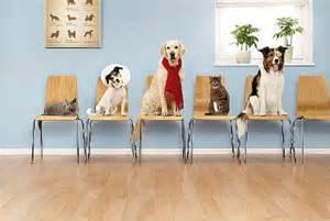 reception at Ahwatukee Animal Care Hospital