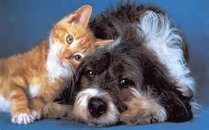 Pet Health Insurance Ahwatukee Animal Care Hospital
