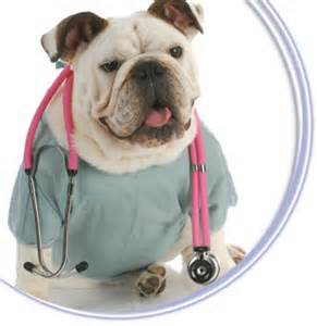 surgery -  Ahwatukee Animal Care Hospital