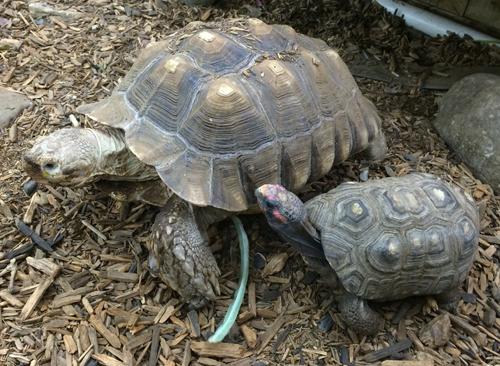 Tortoise Care Ahwatukee Animal Care Hospital