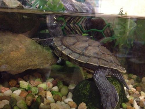 Turtle Care Ahwatukee Animal Care Hospital