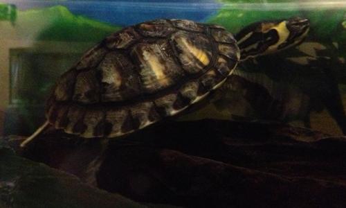 Turtle Health Care