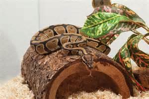Snake Housing