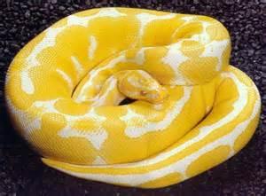 Snake nutrition
