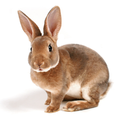 Rabbit health care from Ahwatukee Animal Care Hospital