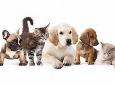Ahwatukee Animal Care Hospital quality veterinary medicine