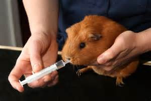 Small mammal veterinary medicine and boarding at Ahwatukee Animal Care Hospital