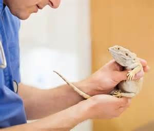 Ahwatukee Animal Care Hospital provides reptile veterinary medicine, surgery, and boarding