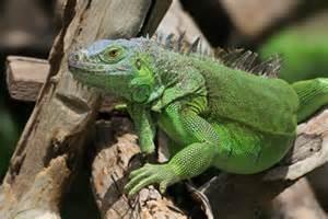 Reptile Medicine at Ahwatukee Animal Care Hospital