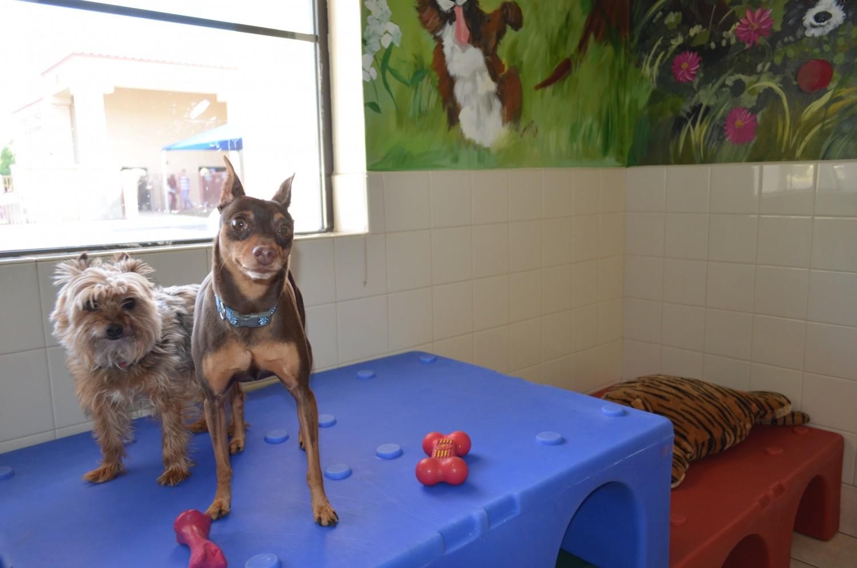 Ahwatukee Animal Care Hospital Daycare