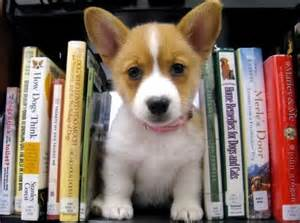 Pet Education and Ahwatukee Animal Care Hospital