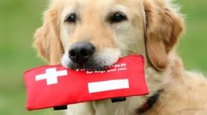 Ahwatukee Animal Care Hospital and Pet Resort - emergency