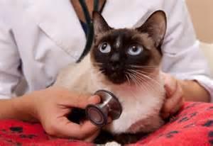 Ahwatukee Animal Care Hospital and Pet Resort