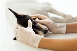 Ahwatukee Animal Care Hospital - annual checkup