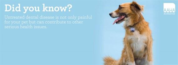 Dental care and pet dentistry - Ahwatukee Animal Care Hospital