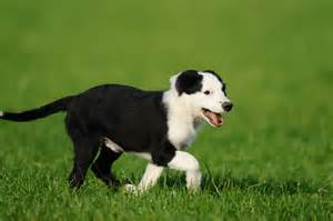 senior pet exercise - Ahwatukee Animal Care Hospital