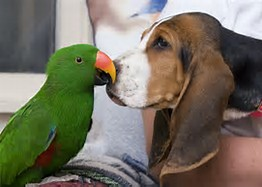 adult pet care at Ahwatukee Animal Care Hospital