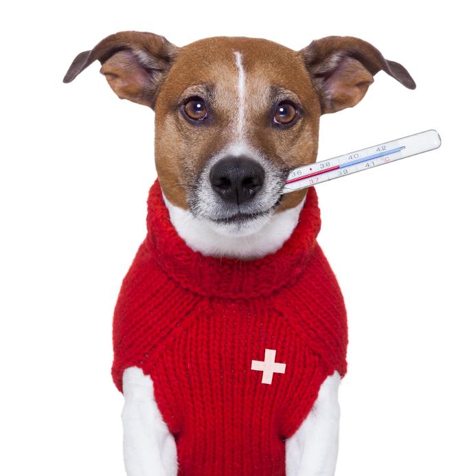 signs of medical emergencies Ahwatukee Animal Care Hospital