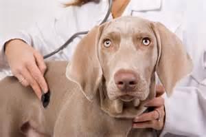 senior pet veterinary exam at Ahwatukee Animal Care Hospital