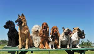We provide clean, comfortable beds, nutritious food, fresh water, toys, fun, and attention for your pet at our day care. Ahwatukee Animal Care Hospital and Pet Resort