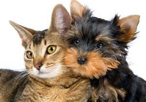 spays and neuters Ahwatukee Animal Care Hospital