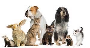 Ahwatukee Animal Care Hospital hours of operation