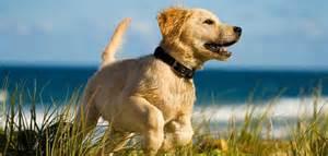 Ahwatukee Animal Care hospital and Wellness Examinations