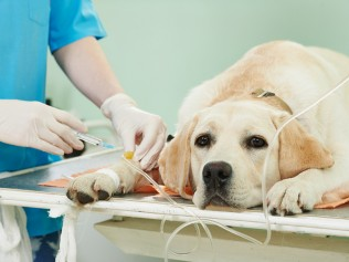 Ahwatukee Animal Care Hospital surgery